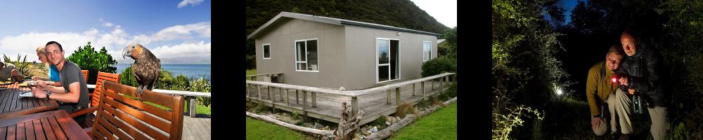 Tierwelt-Neuseeland-Lodge-KapitiIsland